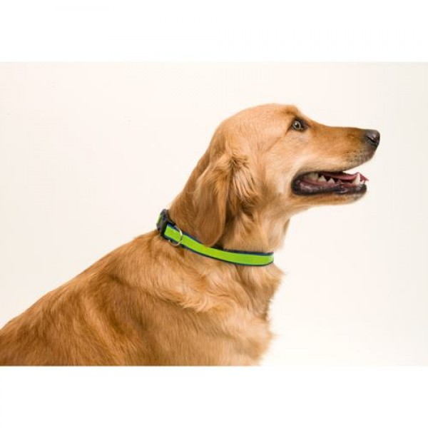Detalle de Boda Collar Reflectante Muttley Negro y Verde